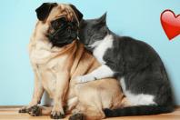 7 imagens que provam que os animais também sabem o que é o amor