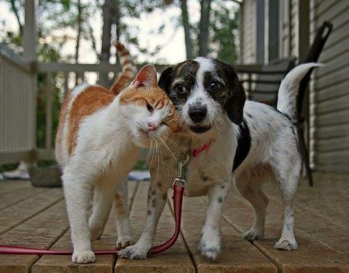 Carinho - cão e gato