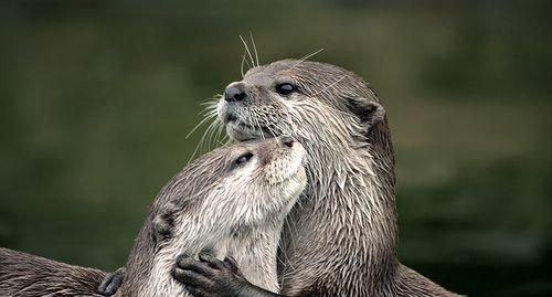 Carinho entre animais