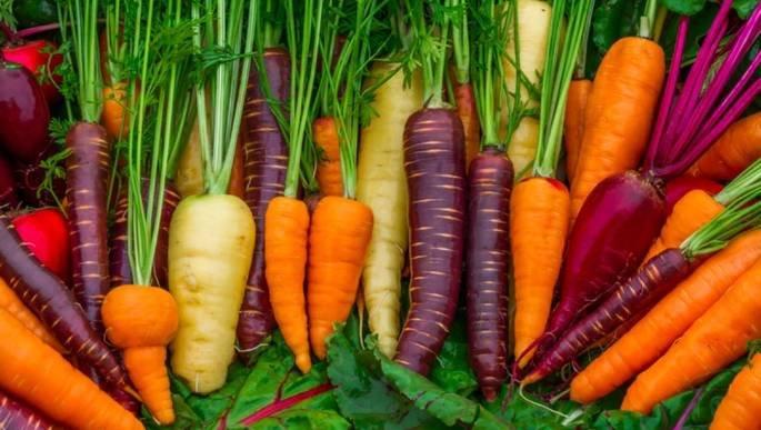 Cenoura de diversas cores