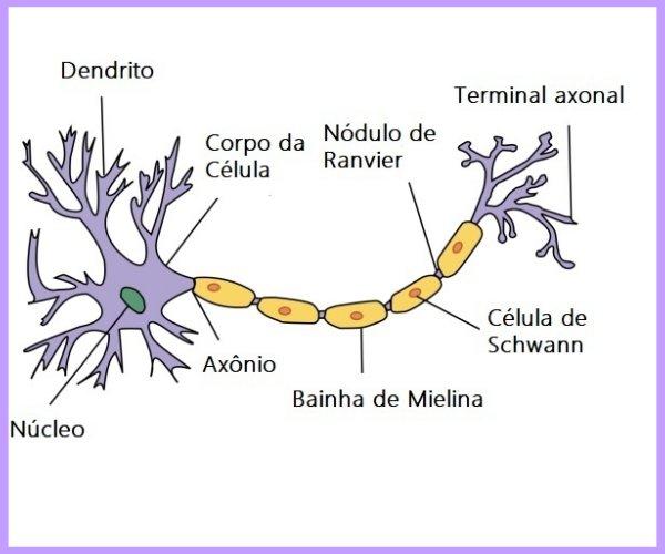 neuronio estrutura