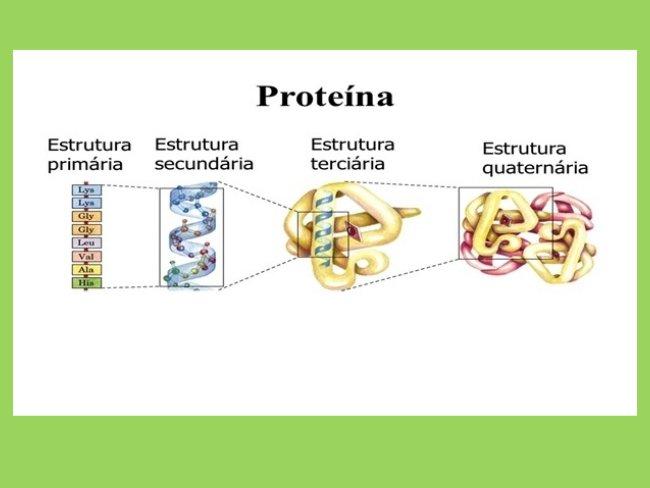 estrutura_proteína