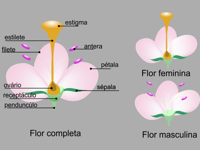 flor masculina e feminina