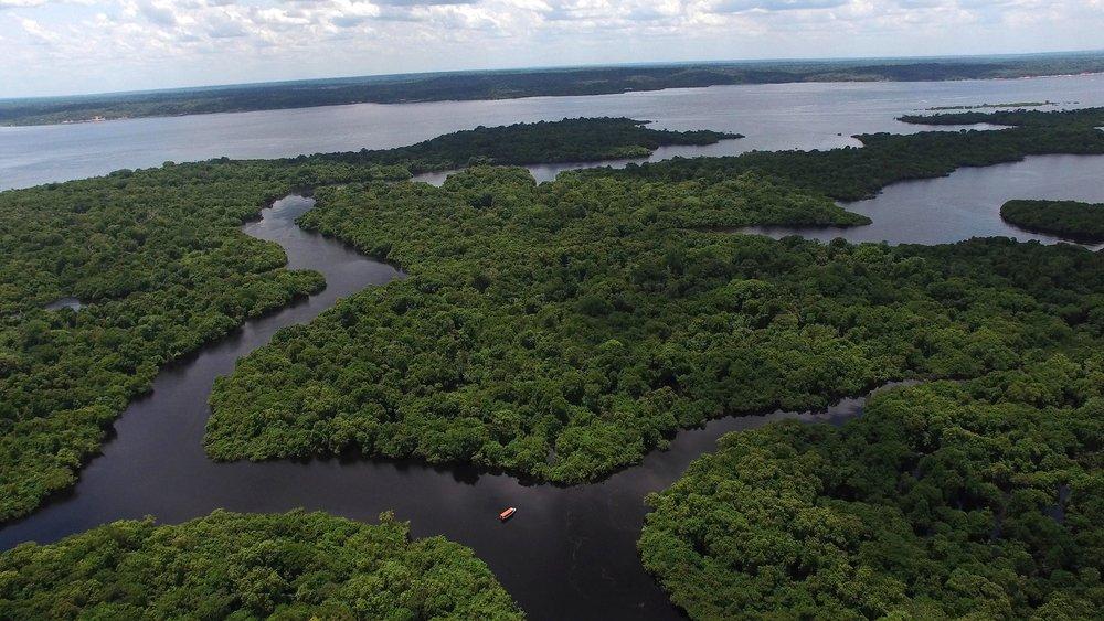 floresta amazonica