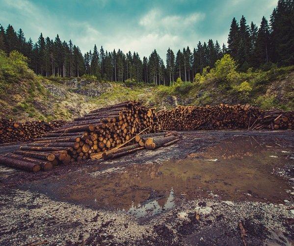 extração madeira
