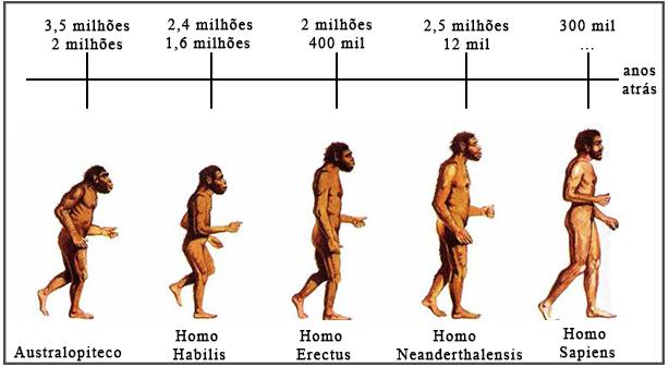 Linha do Tempo - Humanos
