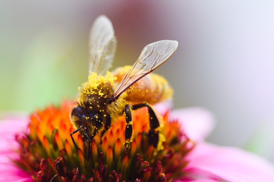 Mutualismo abelha