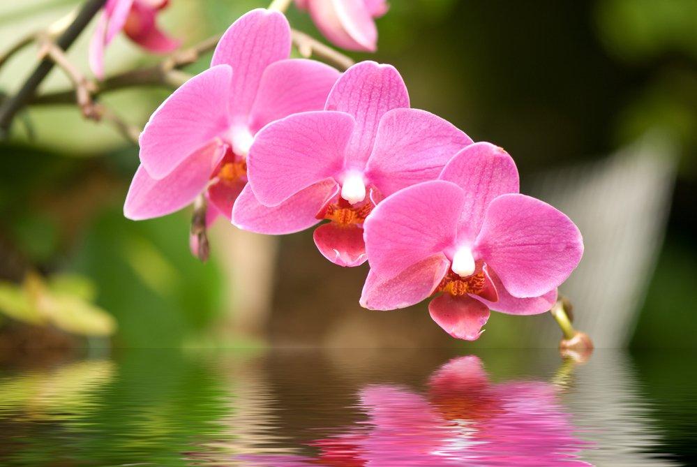 Orquídeas - Significados