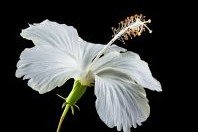 Partes da flor