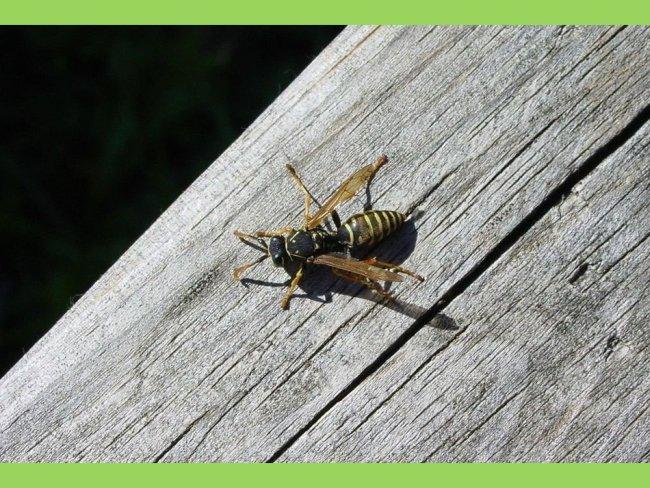 vespa da madeira